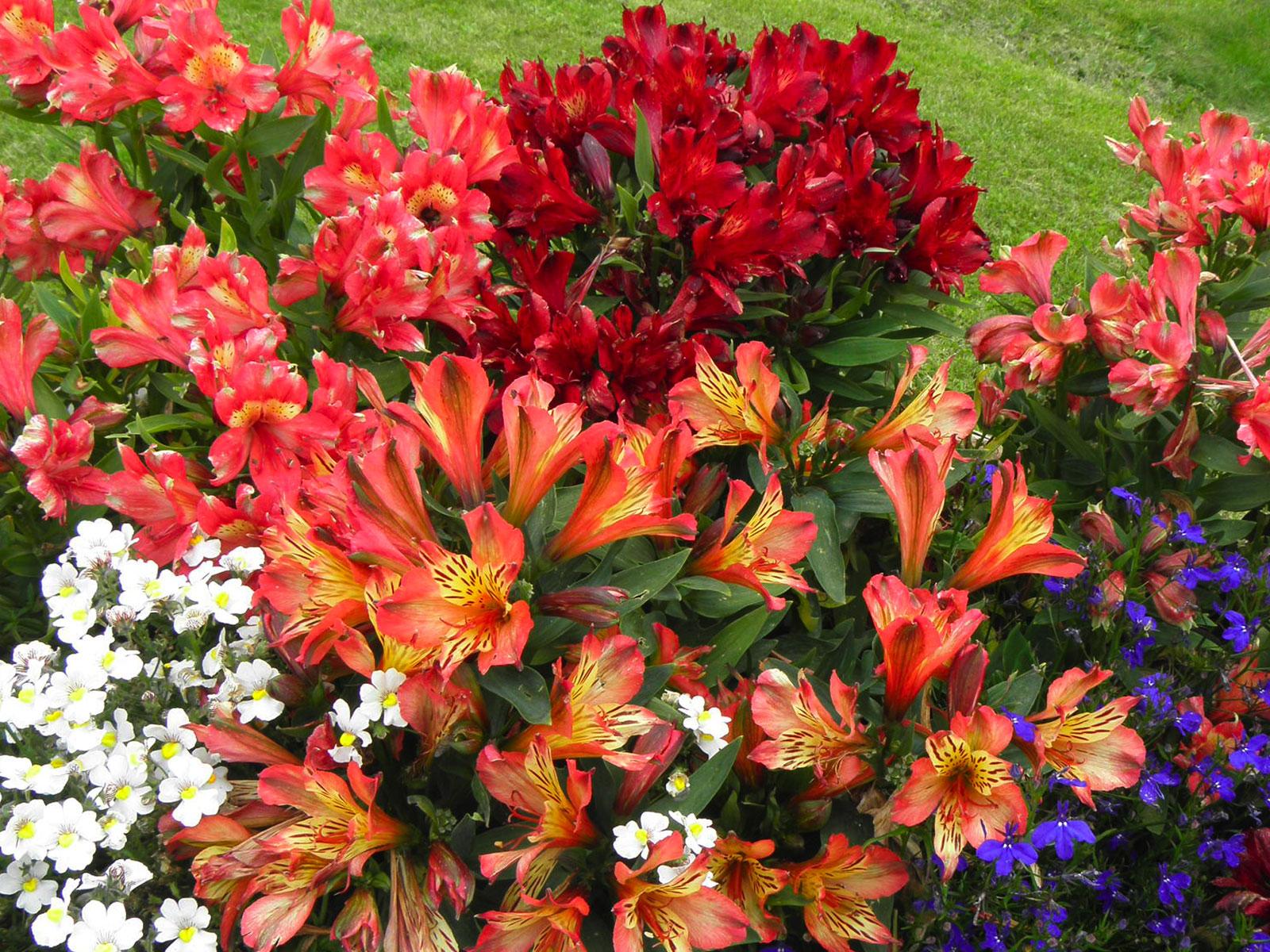 Realizzazione balconi fioriti e aiuole floreali golasecca for Aiuole perenni